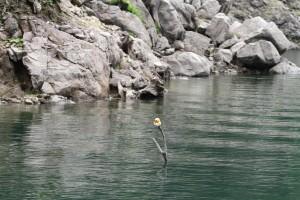 湯西川にはカッパがいます